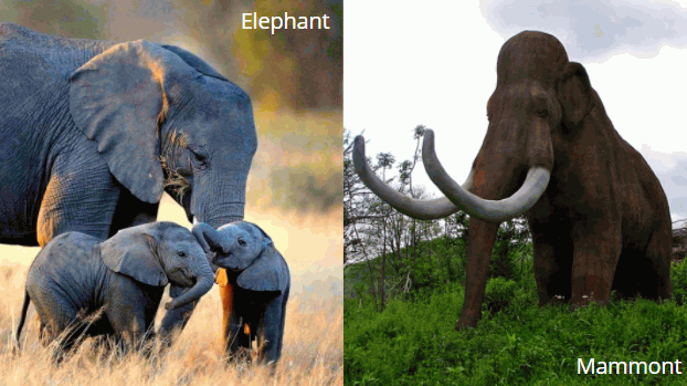 elephants-mammoths
