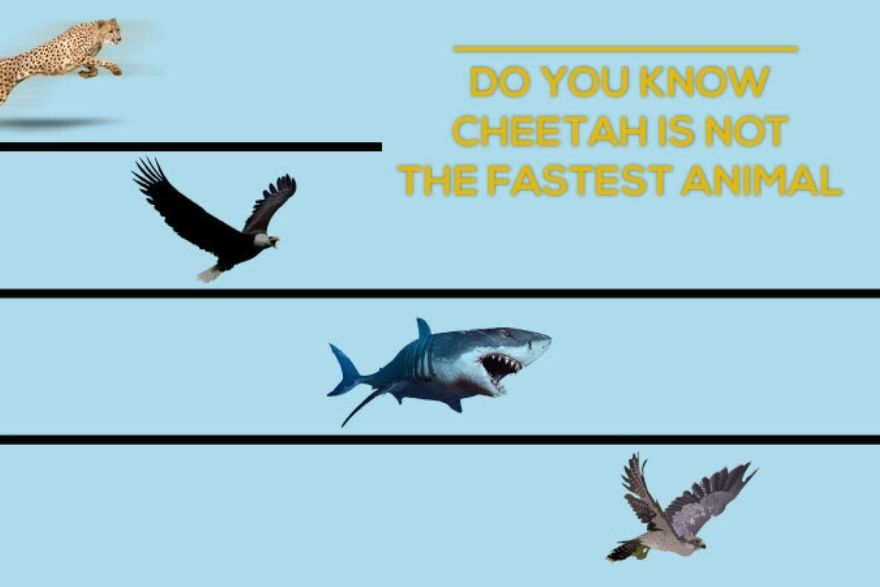Updated List of Fastest Animals in the World 2020
