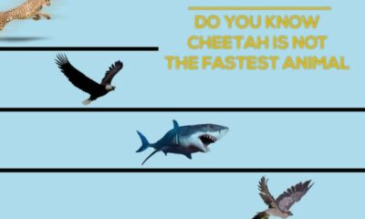 fastest-animals-in-the-world-2020