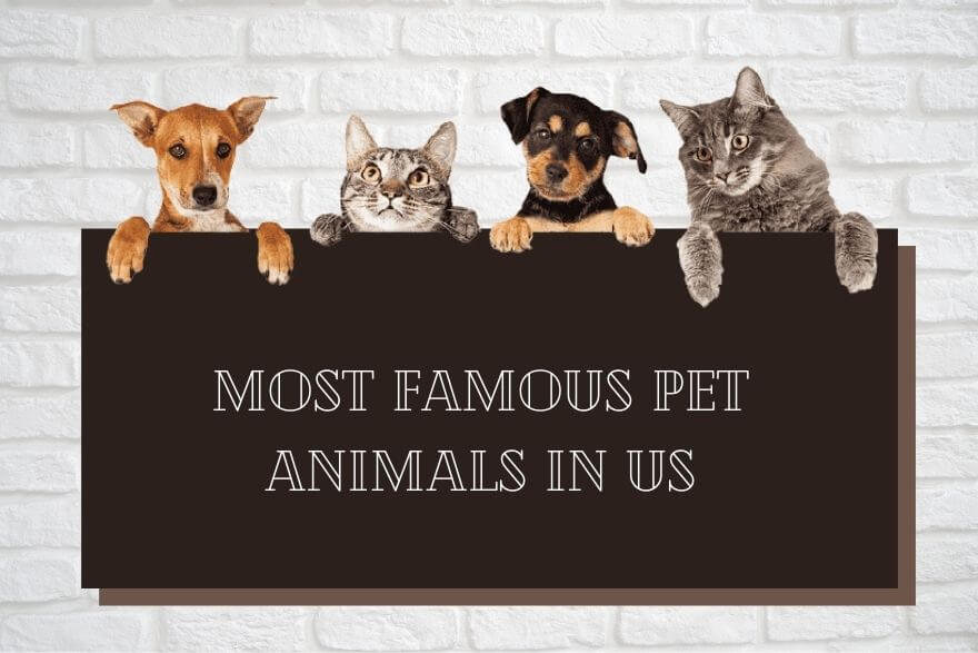most-famous-pet-animals-in-usa