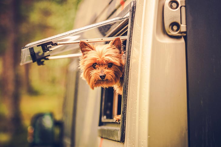 pet-in-your-rv
